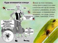 """Профилактика """"клещевых"""" инфекций."""